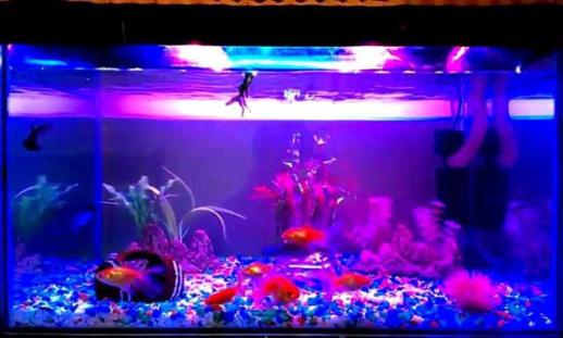 Светодиоды для аквариумов